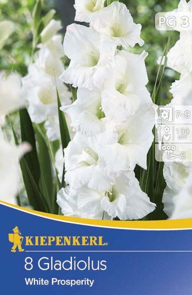 Gladiolen White Prosperity - Weiß