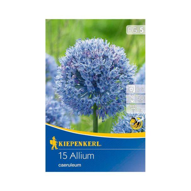 Zierlauch 'Allium caeruleum'