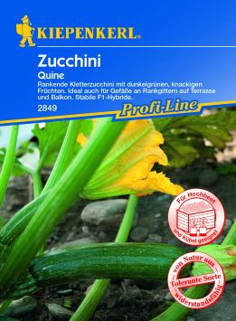 Zucchini 'Quine' F1, grün