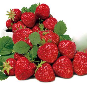 Edel-Erdbeere 'Elsanta', mittelfrüh