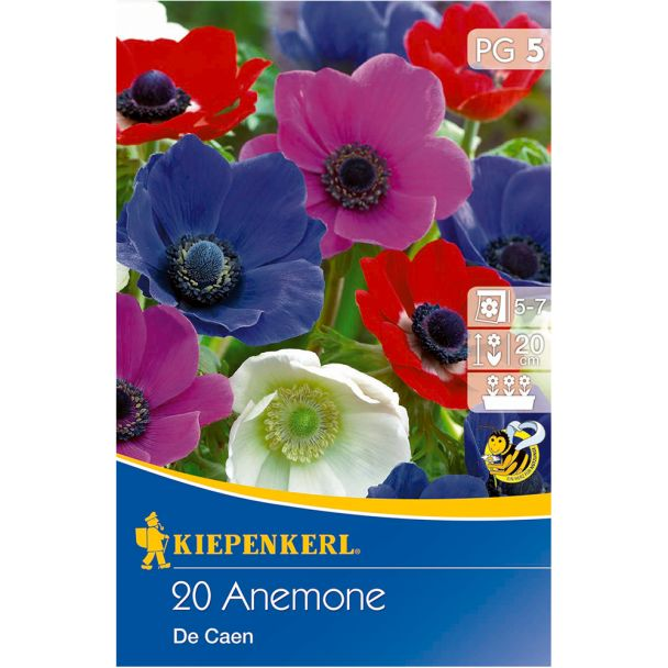 Anemone `De Caen Mix` - Windröschen