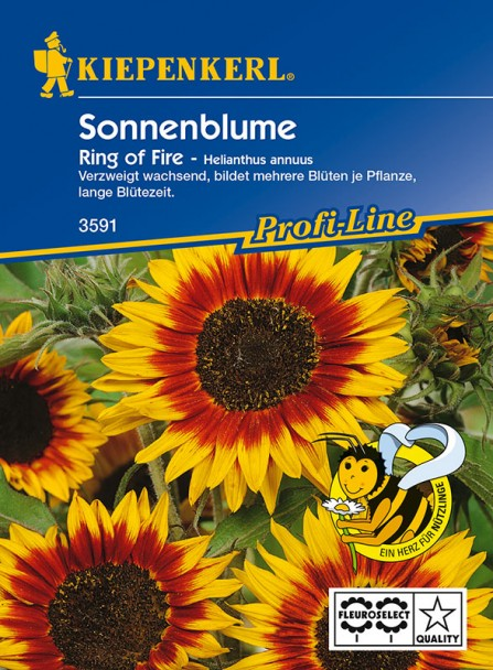 Sonnenblume 'Ring of Fire'