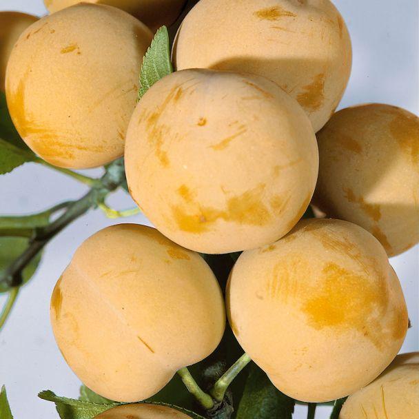 Gelbe Eierpflaume