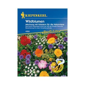 Wildblumen 'Mischung mit Kräutern für die Naturwiese'