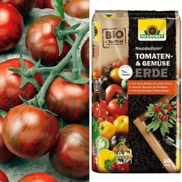 Tomate Zebrino + Erde (Sparangebot)