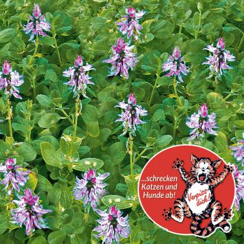 'Verpiss-Dich®-Pflanze', grünes Laub