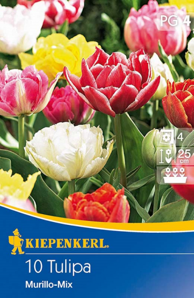 Tulpe `Murillo-Mix` - Blumenzwiebel