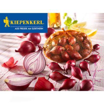 Rote Steckzwiebeln, 250 g (100 g/€ 0,80)