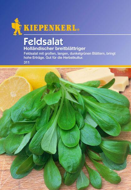 Feldsalat 'Holländischer breitblättriger'