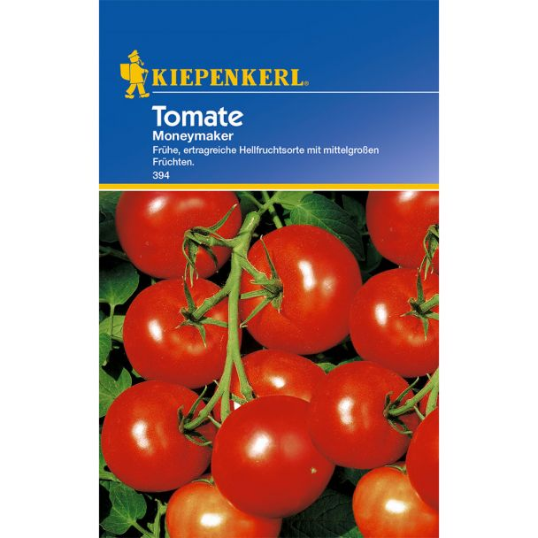 Tomaten 'Moneymaker'