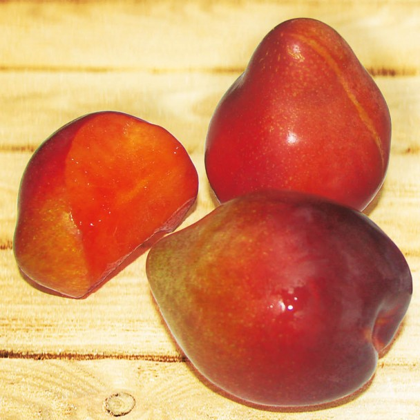 'Sharky's Plum®' Red – Die Haizahn-Pflaume