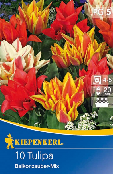 Mehrblütige Tulpe `Balkonzauber Mix` - Blumenzwiebel