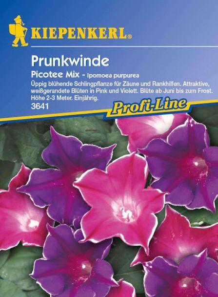 Prunkwinde 'Picotee Mix'