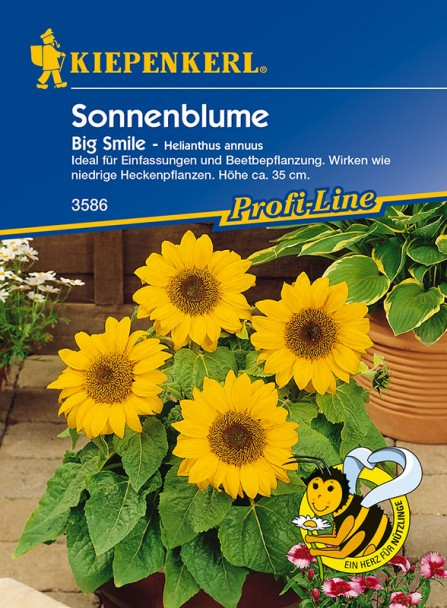 Sonnenblume 'Big Smile'