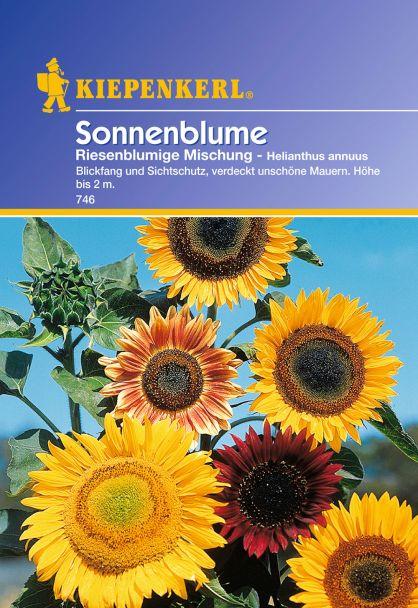Sonnenblumen 'Riesenblumige Mischung'