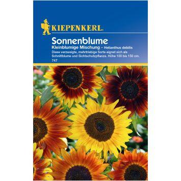 Sonnenblume 'Kleinblumige Mischung'