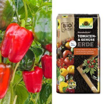 Gemüse-Paprika 'PusztaTraum' F1 + Erde (Sparangebot)