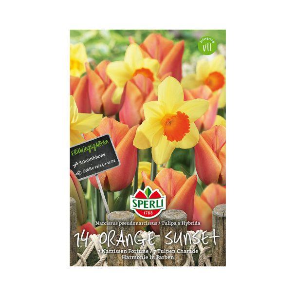 Tulpen- und Narzissen-Mischung 'Orange Sunset'