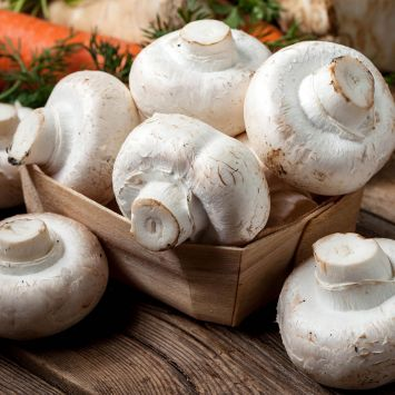 'Weißer Champignon' Pilz-Fertigkultur