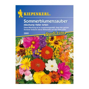 Sommerblumenzauber 'Mischung  vieler Arten'
