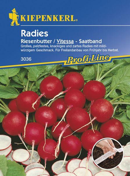 Radies 'Riesenbutter/Vitessa' (Saatband)