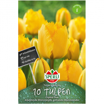 Sperli Tulpen Crystal Star