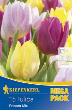 Mega-Pack Tulpen Princen Mix