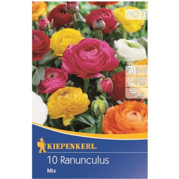 Ranunculus-Mix