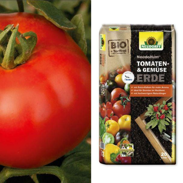 Salat-Tomate 'Rondo Red' F1 + NeudoHum® Tomaten- und Gemüseerde (Sparangebot)