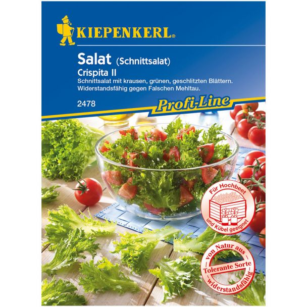 Salat 'Crispita II'