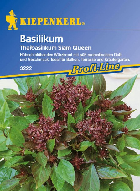 Basilikum 'Thaibasilikum Siam Queen'
