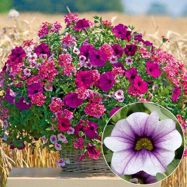 Mini-Petunie Trixi Tricolor Neon Pink