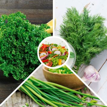 Kräuter-Sortiment: 'Salat'
