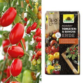 Mini-Roma-Tomate 'Marzino' F1 + NeudoHum® Tomaten- und Gemüseerde (Sparangebot)