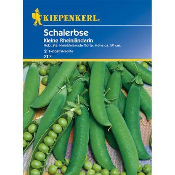 Schalerbsen 'Kleine Rheinländerin'