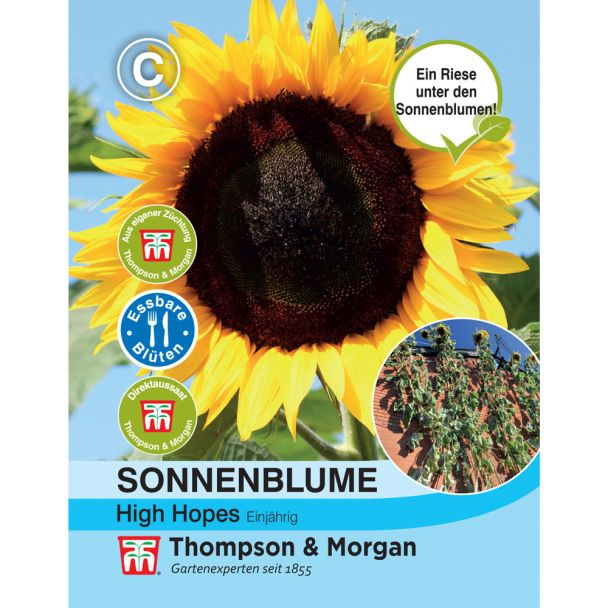 Sonnenblume High Hopes