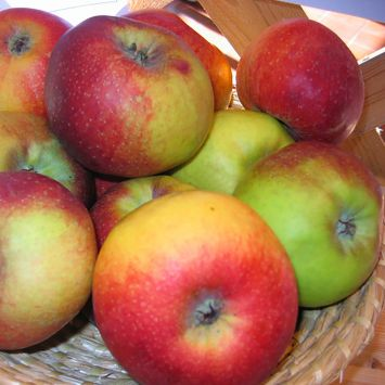 Apfel Rheinischer Winterrambour -Apfelbaum