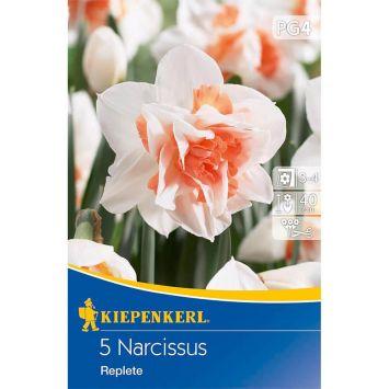 Gefüllte Narzissen `Replete` - Blumenzwiebel