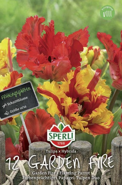 Papageien-Tulpen Garden Fire + Flaming Parrot