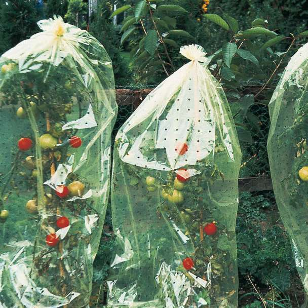 Tomaten-Hauben, gelocht, 10 x 0,65 m