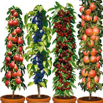 4 Säulen-Bäume: Decora, Fruca, Victoria, Starcats®