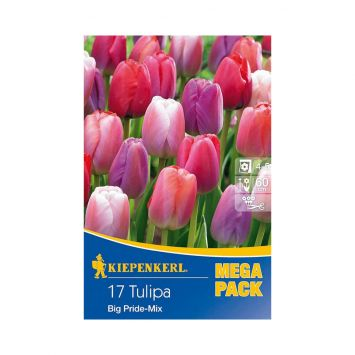Tulpen 'Big Pride' Mix