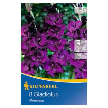 Großblumige Gladiole Mombasa