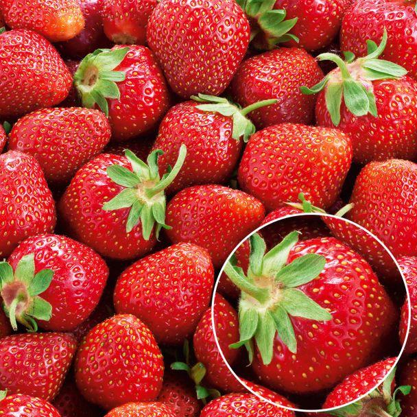 Erdbeeren 'Mieze Nova®'