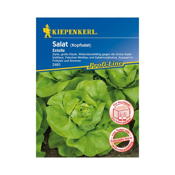 Sommer-Kopfsalat 'Estelle'