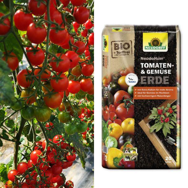 Spar-Set: 2 Perlino - Cocktail - Tomaten + Erde
