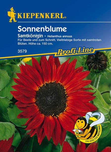 Sonnenblumen 'Samtkönigin'