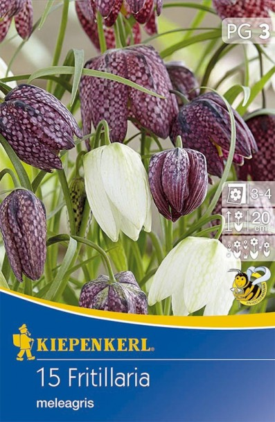 Schachbrettblumen - Mischung