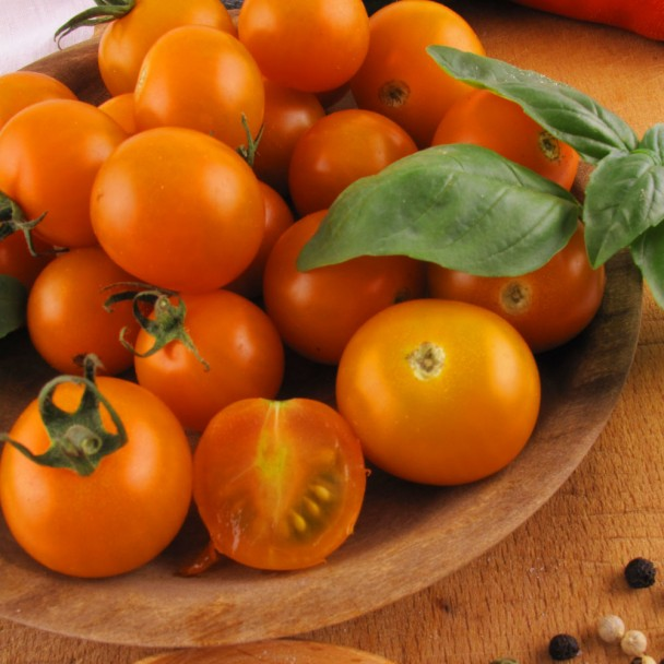 'CherryGold' F1 - veredelte Mini-Cherry-Tomate