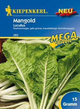 Mangold 'Lukullus'